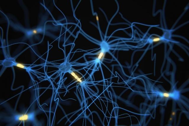 Contemporary-Procedures-Assist-Researchers-Observe-Neurons-Compute