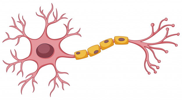 Scientists-Portray-Minuscule-Evolved-Neuron-Antennae-Diminish-Brain-Congruence
