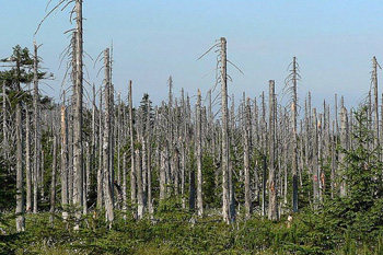 Forest-Soils-Recuperating-From-Impact-Of-Acid-Rain